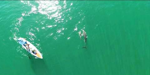 Stand up paddle dolphins, westoz