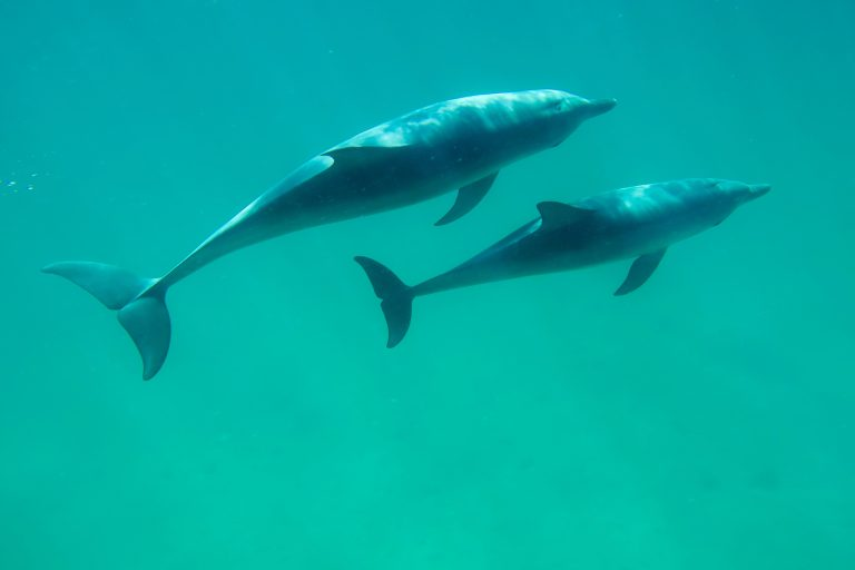 Swim with Wild Dolphins Perth