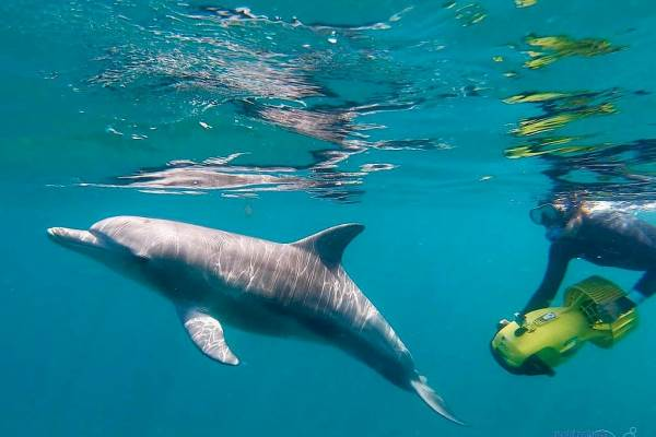 Swim with Wild Dolphins, Perth, Sightseeing Pass Australia